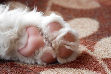 closeup of sweet puppy paw