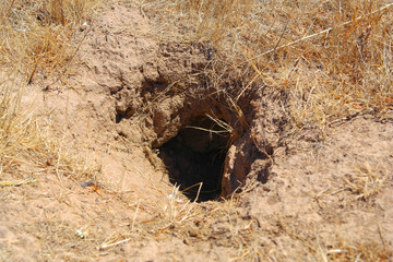A hole in the ground - home for a wild animal