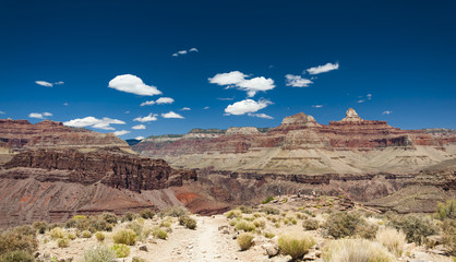 Dry Landscape of Grand Canyon