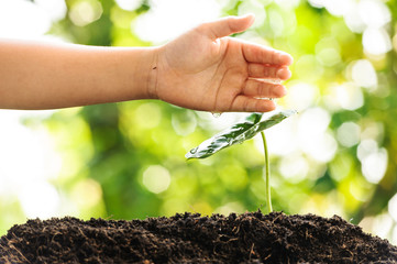 Young boy hand watering on green plant