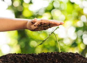 Young boy hand protect green plant growing on soil