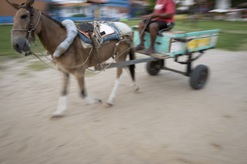 Motion blur of traditional horse and cart moving along rural dirt road in northeastern Nordeste Bahia Brazil