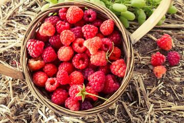 Basket with fresh ripe raspberries