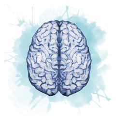 Watercolor brain
