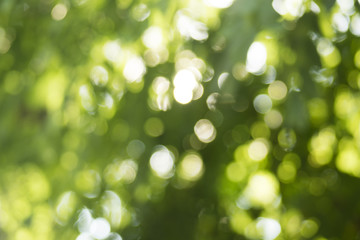 Beautiful nature green bokeh background