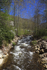 Mountain Creek in the Spring