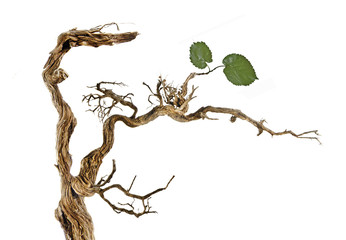 Dry branch with leaves Wall mural