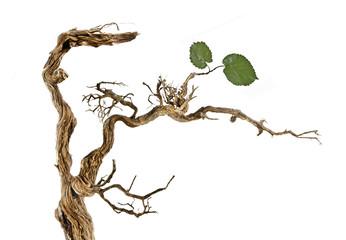 Dry branch with leaves Fotoväggar