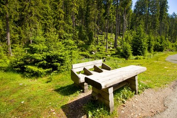 bench near the forest