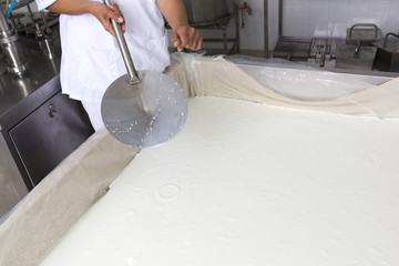 Cheese production creamery dairy worker coagulation