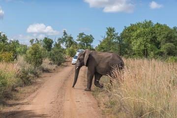 Elephant. Pilanesberg national park. South Africa.