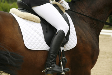 Beautiful dressage sport horse during competition with rider