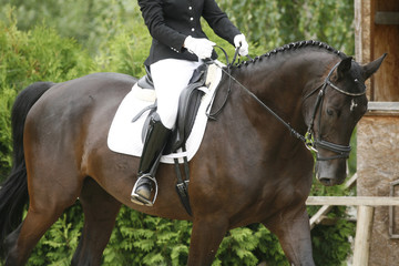 Unknown rider riding on a dressage horse