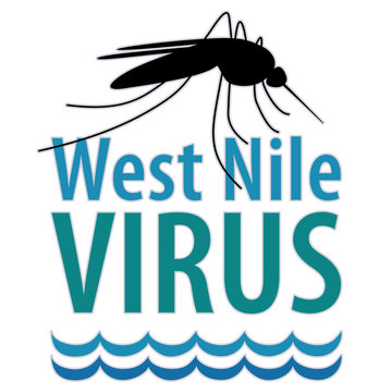 West Nile Virus disease, mosquito, standing water, graphic illustration