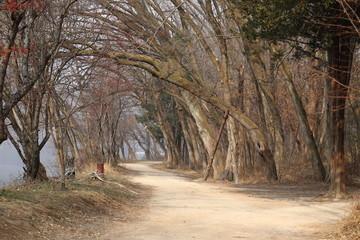 Namisum (During Autumn)- A Scenic Island of South Korea where Many Korean Dramas were Filmed