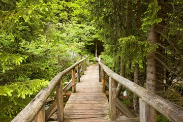 footbridge over the River Forest