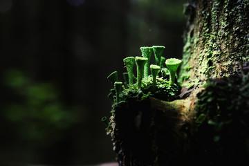 abstract macro mushrooms