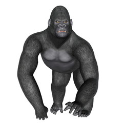 Angry gorilla walking - 3D render