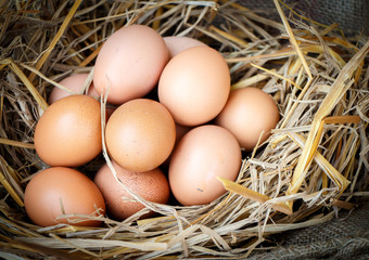 Group of raw eggs put on straw in farm