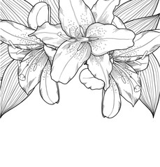 beautiful black-and-white background with lilies, hand-drawn