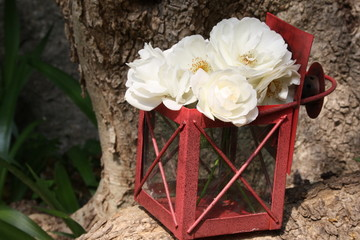 lantern and white roses in the garden