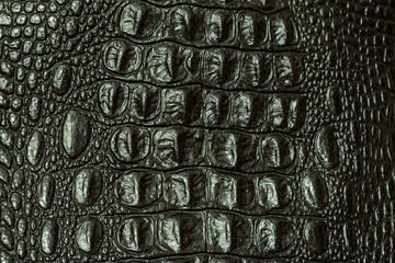 The texture of crocodile skin