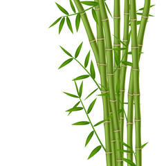 Wall Mural - Green bamboo stems with leaves isolated on white background