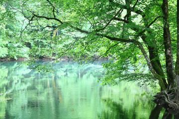 forest landscape in summer europe pine