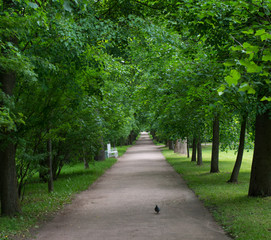 Park with road