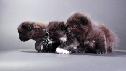 group of black kittens on dark backround