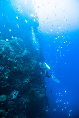diver blue water scuba diving bunaken indonesia sea reef ocean
