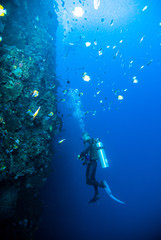 Foto auf Acrylglas Tauchen diver blue water scuba diving bunaken indonesia sea reef ocean