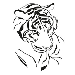 Tiger, black and white