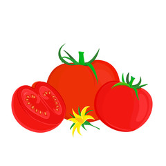 Illustration of three ripe tomatoes with green stems attached. One of tomatoes are halved and ripe flesh with seeds are visible. Yellow tomato flower lying in the centre. Isolated on white