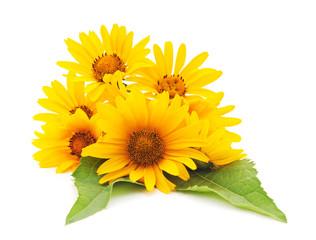 Yellow daisies.
