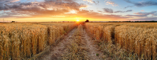 Photo sur Plexiglas Culture Wheat field at sunset, panorama