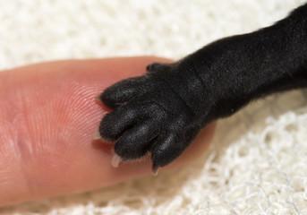 hundepfote auf dem finger welpe