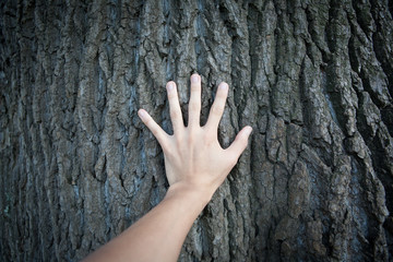 樹木に触れる