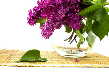 pink lilac flowers in a glass jar