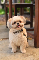 dog,pet,puppy,portait,cute,animal,wall,background,look,pretty,looking