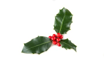 Christmas, Holly, Leaf.