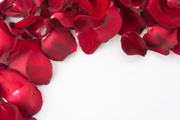 rose petal frame on white