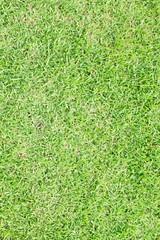 Grasses background