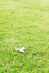 White flower on grasses background