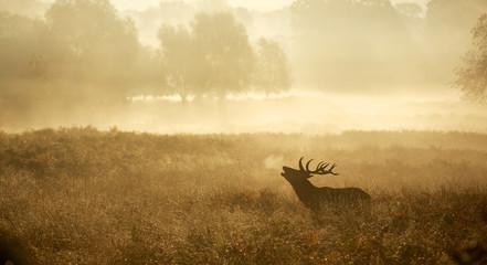 Misty deer silhouette landscape