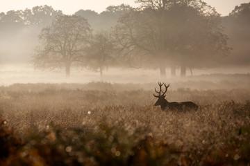 Fotomurales - Misty deer silhouette landscape