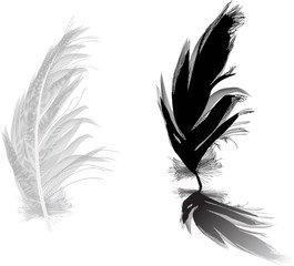 grey an black two feathers with shadow