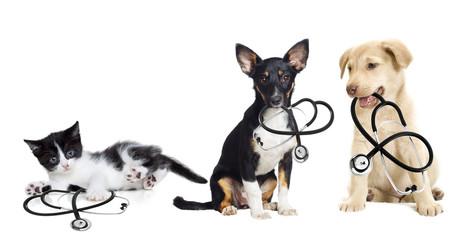 Fototapete - puppy and kitten vet