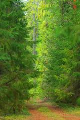 landscape wildlife Indian summer forest
