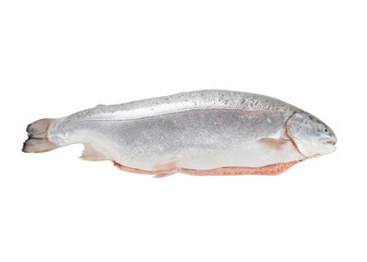 Full trout